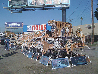 "Mid-City boutique ""L.A. Tigers."" the cities ""one-stop"" location for stuffed tigers and marble framed 3-D light-up artwork"